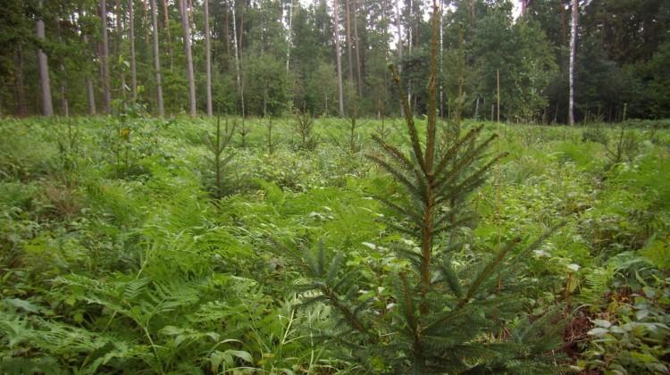 Jelgavas pilsētas meži