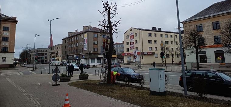Koku vainagu veidošana Lielajā ielā