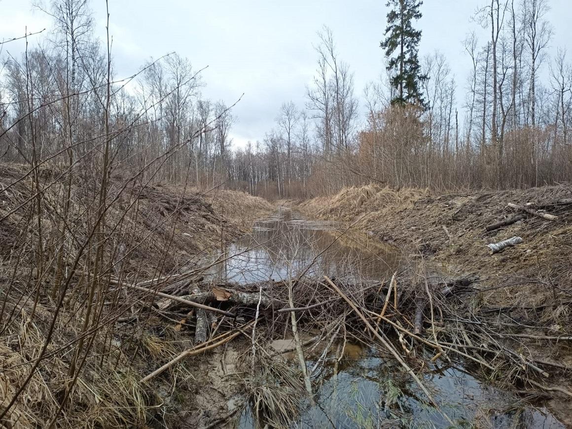 Bebru aizsprosti pašvaldības mežos